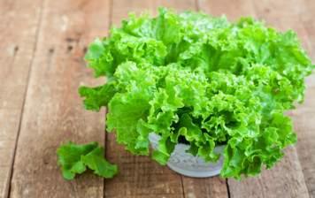 Salade Batavia de Genève
