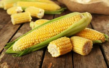 Maïs frais BIO en épi
