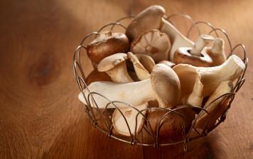 Oyster mushroom - GRTA